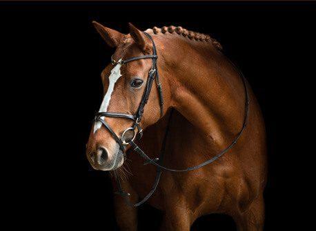 Horse - LED