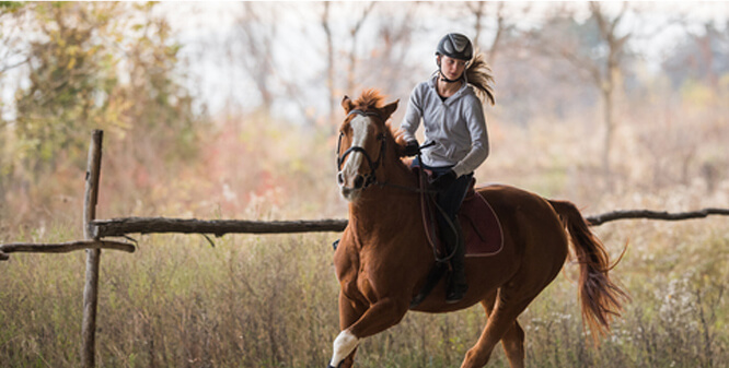 Trail Rides and Hacks